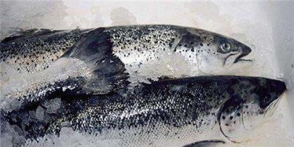 """重磅!专家发声:海鲜鱼类不会感染新冠病毒""""为慎重起见,今年2月以来,海"""