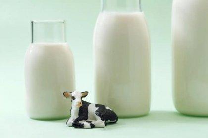 """吞下""""一只酸奶牛"""",新乳业欲破解丛林法则【重庆火锅底料厂家】"""